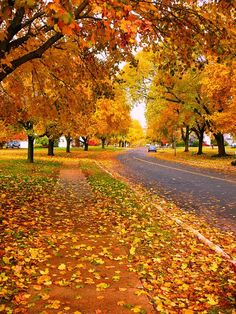 Autumn Road, great orange, yellows, reds, and green.