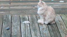 The Mighty Hunter Never Rests. - http://cutecatshq.com/cats/the-mighty-hunter-never-rests/