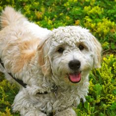 This is for my sisters little ones. Helping to lobby for a puppy! Sneeze-Free: Hypoallergenic Dog and Cat Breeds