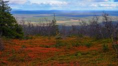 Ruska - autumn colours - on the fells of Finnish Lapland. Photo by Tim Bird Photo. Endless Night, Autumn Colours, Bird, Mountains, Landscape, Painting, Travel, Ideas, Finland
