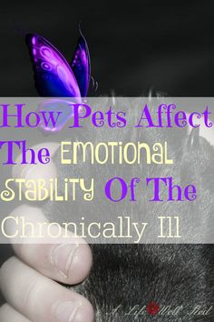 My corgi proves this to me EVERYDAY! She is VITAL to improving my FIBROMYALGIA SYMPTOMS, because of the COMFORT and LOVE I feel from her! ♥ Read this if you don't know if you should get a pet or not. SO WORTH IT! ♥♥