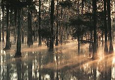 """Manchac Swamp, located in the U.S. state of Louisiana, near the city of New Orleans, is also known as """"swamp of the ghosts"""""""