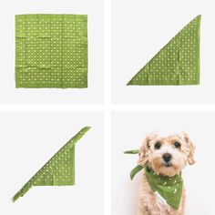 How to: fold a bandana for your dog!