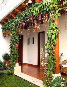 Pflegeleichte Pflanzen - das Kletterjuwel - Área Externa,Jardim e Varanda - Paisagismo