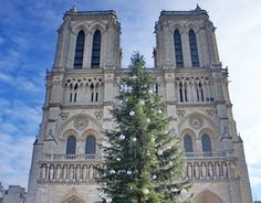 christmas tree in the notre dame church in a cold day of december 2014 December 2014, Cold Day, Notre Dame, Street Photography, Behance, Christmas Tree, Gallery, Check, Teal Christmas Tree