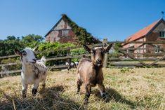 Hogchester Cottage, rural bliss in Dorset.