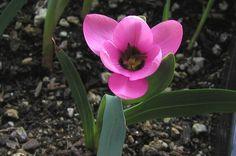 cheap flowers bakersfield ca