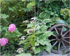 Herzenswärme Plants, Heart, Plant, Planets