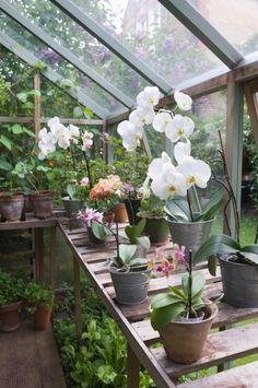 Orquídeas en casa: cómo cultivarlas con éxito (1) Clic en la imagen para leer el artículo.