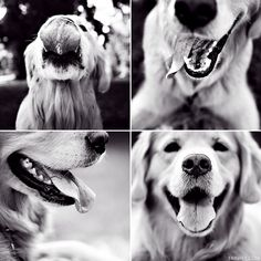 Google Image Result for http://www.erinvey.com/bark/wp-content/uploads/2009/08/4-tongues.jpg