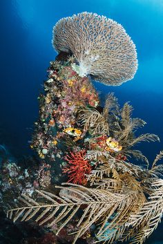 Coral reef bouquet by Luko Gecko on Flickr.