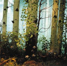 Nealy Blau, Columbine, Denver Museum of Nature & Science, 2005