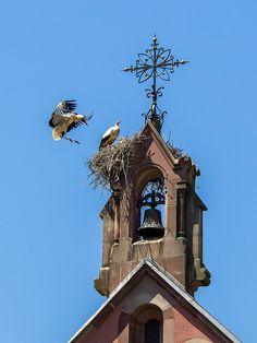 Stork Nest in Alsace, France. Beautiful Birds, Beautiful Places, Haute Marne, Alsace France, Belle France, Kirchen, Belle Photo, Bird Houses, Beautiful Creatures