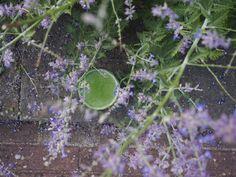Nature is my government 💚 Snijbiet•komkommer•citroen•appel