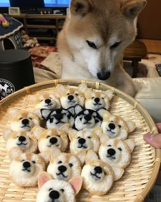 theirs something slightly messed up about this. that shiba inus face says it all. also it gives me ponyo vibes, with all the mini ponyos! Shiba Inu, Shiba Puppy, Corgi Dog, Husky Pet, Cute Funny Animals, Cute Baby Animals, Funny Dogs, Animals And Pets, Cute Puppies