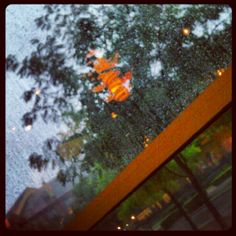 rain, window, light, reflection, tress
