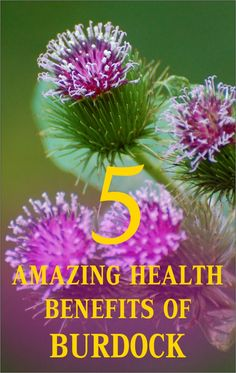 5 Amazing Health Benefits of Burdock | NaturalHQ