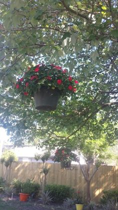Hanging flowers in the trees
