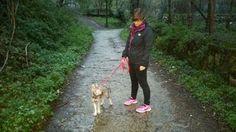 diaryofapoleaddict diary of a pole addict czechoslovakian wolfdog puppy arimminum Zelda squidgeypaws007