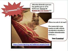 Haz teaming con Rabbit Rescue Spain