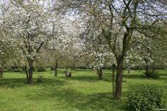 Traditional orchard (c) Chris Richards