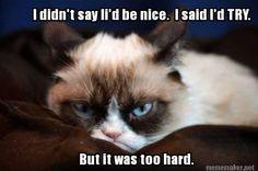 #GrumpyCat #meme For more Grumpy Cat stuff, gifts, quotes and meme visit www.pinterest.com/erikakaisersot