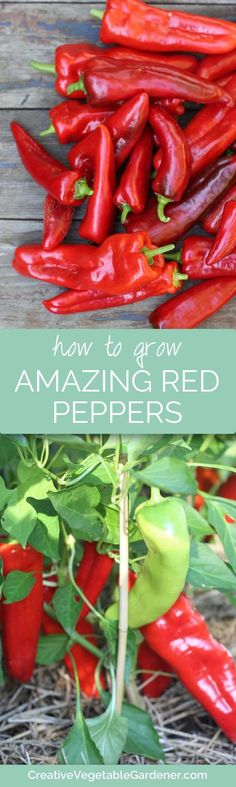 Wish you had more success with red peppers? Here's your #1 tip!
