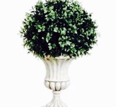 A personal favorite from my Etsy shop https://www.etsy.com/listing/253255021/topiary-topiary-ball-boxwood-topiary