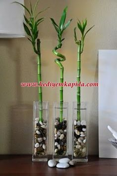 Bamboo garden helps you to pursue gardening, ornament house and moreover at the same time, has got some importance in Feng-shui as well. lucky bamboo is considered better tree-plant for doing Feng-shui cure for your home. Indoor Garden, Indoor Plants, Indoor Bamboo Plant, Bamboo Plant Care, Diy Garden, Small Plants, Hanging Plants, Garden Plants, Lucky Bamboo Plants