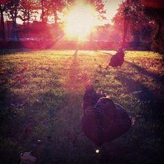 #farmlife  (at Wynchinford Farm)