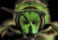 A Beautiful Collection of Insects - In Focus - The Atlantic