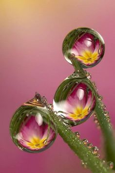 flowers reflected in water droplets