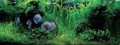 Nature Aquarium: Complete Works 1985-2009 By Takashi Amano - TFH Magazine Blog