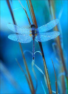 El azul es un color que denota confianza, y la libélula hace regencia a lo frágil y débil que es esta, y como puede ser perdida de un momento a otro
