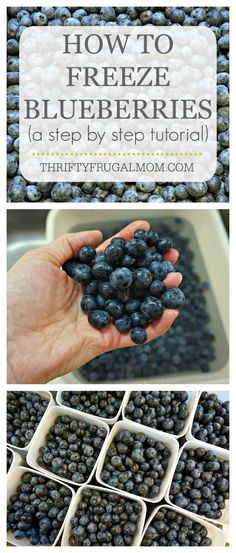 A step by step photo tutorial on how to preserve blueberries by freezing them. It's super easy, plus it can be a big money saver too!