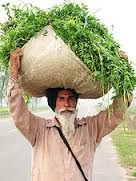 Punjab farmer, the 'land of five rivers', Northwest of India. We Are The World, People Around The World, Around The Worlds, Punjabi Culture, Amazing India, Portraits, New Delhi, India Travel, Historical Sites