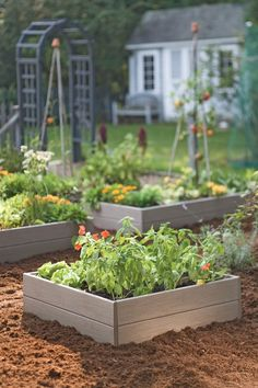 Learn important steps in planning and preparing for a raised vegetable garden bed, such as size, spacing, and building materials. See some different ways to create a raised garden bed. A raised bed vegetable garden is a garden which is built on top. Backyard Vegetable Gardens, Vegetable Garden Design, Outdoor Gardens, Garden Soil, Garden Boxes, Common Garden Plants, Planter Garden, Garden Web, Potager Garden