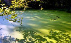 Usados na agricultura e nas indústrias de alimentos e limpeza, fosfatos podem prejudicar meio ambiente