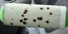 Use a lint roller right after being in the woods or on a brush walk.. for humans & pets: This could be the most important thing that you see me post! Ticks are an getting worse every year, and these things are as lethal as a venomous snake in the wrong scenario! Please not only read it, but share it! Make sure we get the word out about these tics and the disease they carry!...It's almost Summer! Time for camping, hiking and getting outside to play. Don't let those pesky annoying ticks stop…