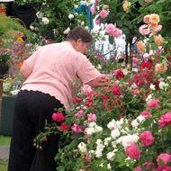 2011 Chelsea Flower Show