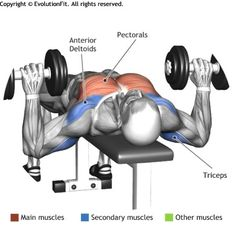 CHEST - DUMBBELL BENCH PRESS