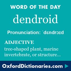 dendroid (adjective): (Of a plant, marine invertebrate, or structure) tree-shaped; branching.