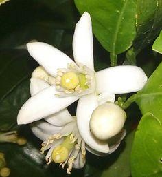 Flor hermosa, fuerte y delicada a la vez...