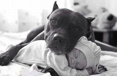 Awwe pit bull and baby :) !