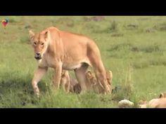 Private Guide World presents African Safari collection