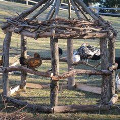 Pullet gazebo; Hawk hideout