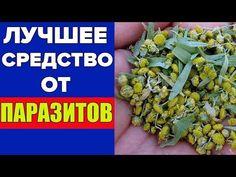 Лучшее средство от паразитов! Как очистить организм от паразитов просто и эффективно - YouTube