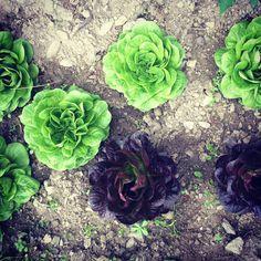 #insalata #salad #orto #homemade #soddisfazioni