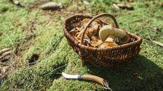 Pilze sollten Sie vorsichtig und schonend mit einem Messer abtrennen. (Quelle: imago/Westend61)