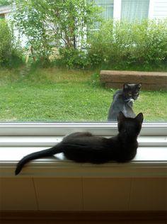 Outside/inside cat